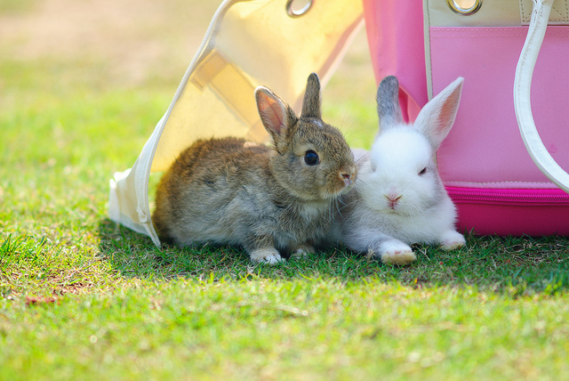 США, видеоклип, кролики, приют, помощь