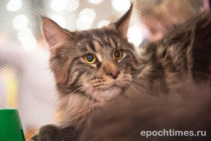 В США мужчину приговорили к 2 годам тюрьмы за убийство кошек