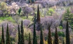 ботанический сад, весна, Грузия