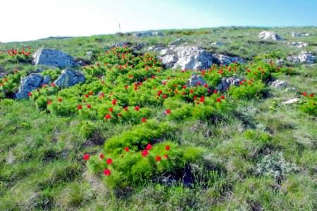 Адонис на плато Ай-Петри. Фото: Алла Лавриненко/Великая Эпоха