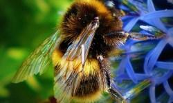 США, пчёлы, укусы