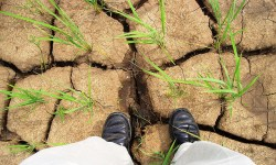 США, Калифорния, засуха