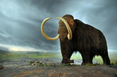 Mammoth-model