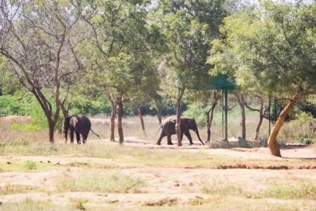 Zoopark-Indiya-7-675x450