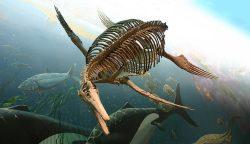 Окаменелый скелет ихтиозавра в Смитсоновском Национальном музее естественной истории.