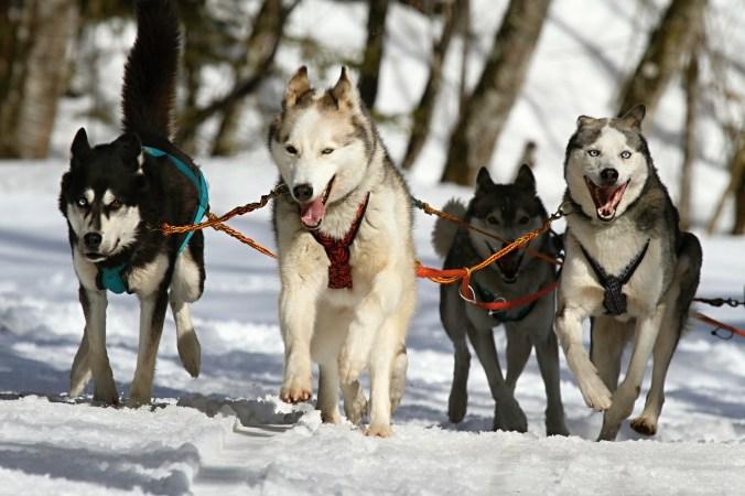 Породистых собак разводили древние люди
