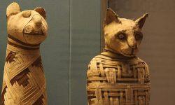 мумии