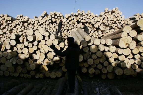 Древесина в Яньбянь, этническом корейском графстве на северо-востоке Китая, февраль 2008. Фото: China Photos /Getty Images