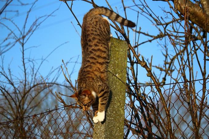 Коты часто находят дорогу домой. Фото: pixabay.com/CC0 Public Domain