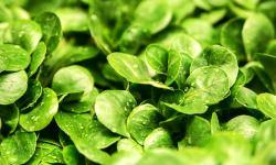 салат, овощи, магний