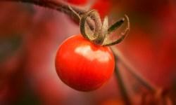 помидор, овощи