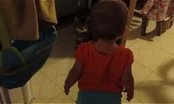 дочка, видео, кошка