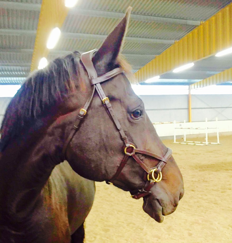 Eponia Side pull two bridles in one