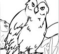 Owl coloring page printable desktop animals in winter for boys pc hd