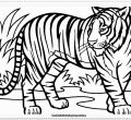 Widescreen coloring pages tiger of that live in trees androids full hd pics tiger animal printable