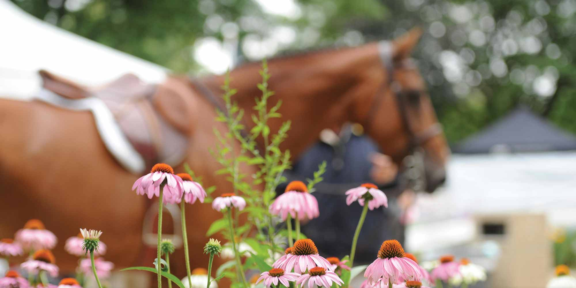 EQ Graphics | Horse Photography with Flowers at a Horse Show Grounds