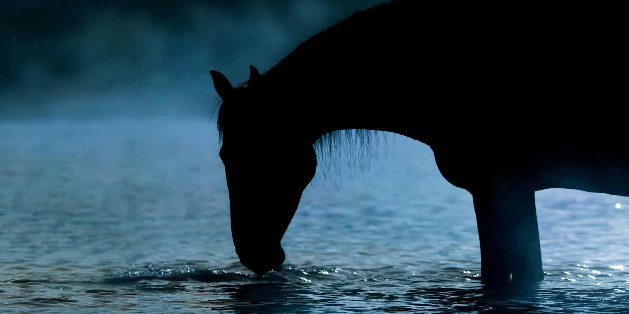 EQ Graphics   Horse Silhouette Drinking Water in Texas on a Foggy Day