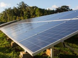 Andhra Guards damage crores worth solar panels due to lack of compensation, four held
