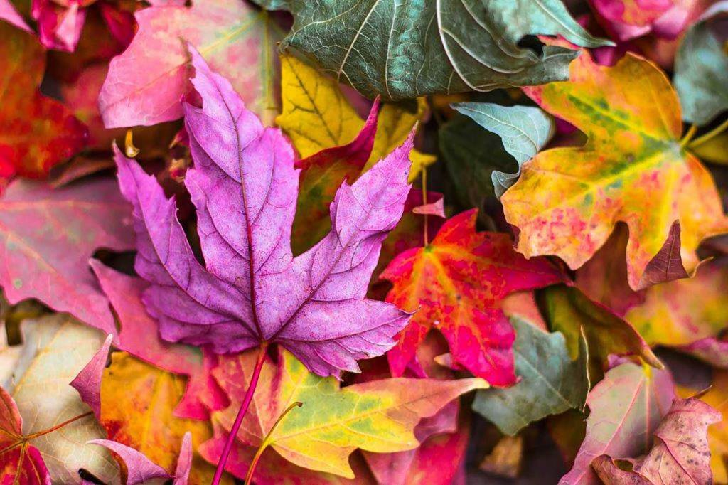 Autumn colour - Autumn Feng Shui iNZ