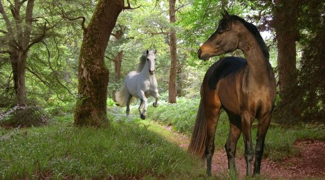 """""""The Path of the Horse"""" - Documentary"""