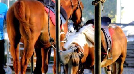 Why I love horseback riding
