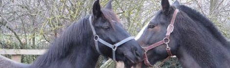 Crampy horses!