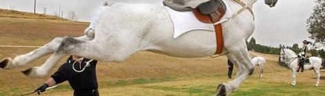 What horse bullies get in return