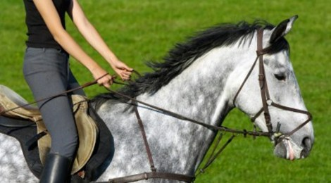 Ten things that most novice equestrians have done already