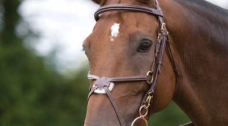How to bridle your horse