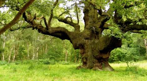 A hack inside Sherwood Forest