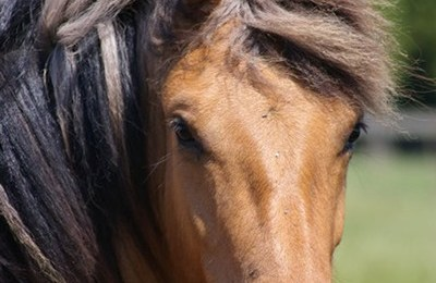 """Guest post -Literature passage: """"In Pursuit of a Horse"""""""