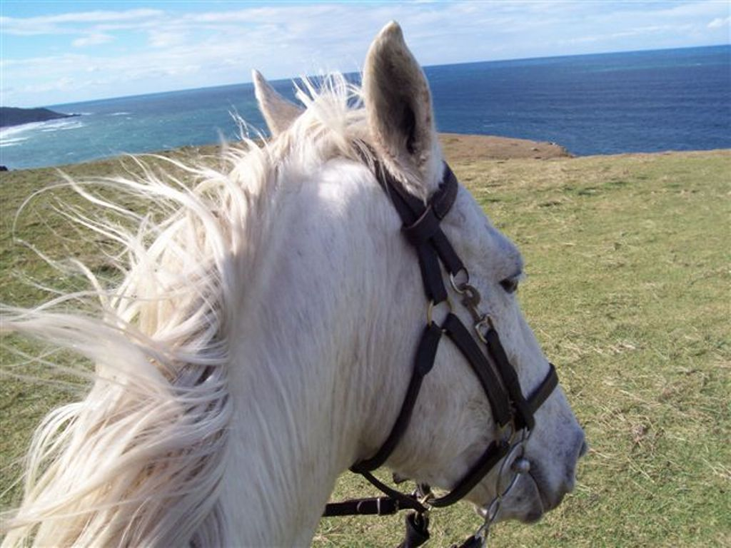 Guest post: Unusual Horse Related Careers – Equestrian from