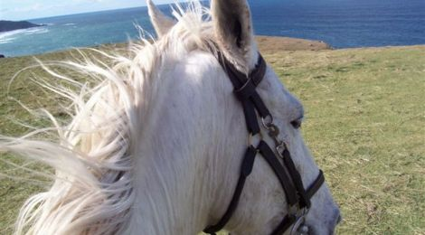 Guest post: Unusual Horse Related Careers