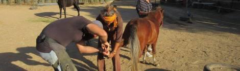 Natural Hoofcare Workshop in Crete: Day 1