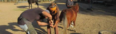 Natural Hoofcare Workshop in Crete: Day 1