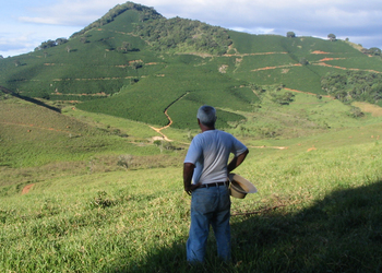 Man looking at landscape of Coffee farm