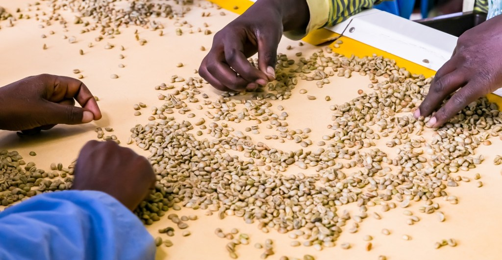 Ethical coffee brands treat farmers fairly.