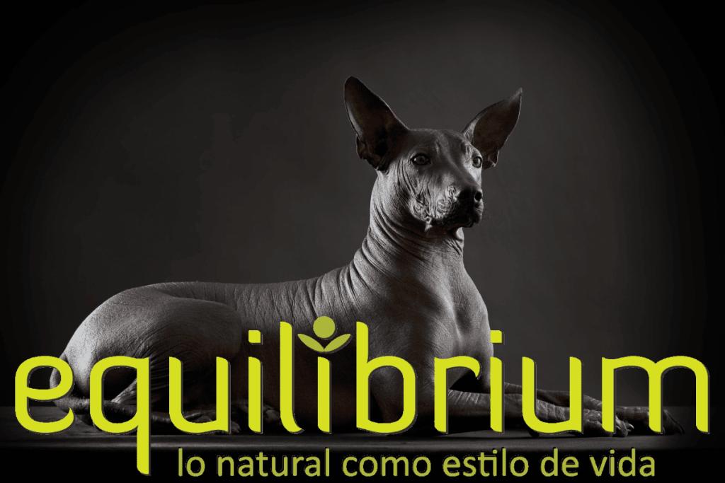 Xoloitzcuintle