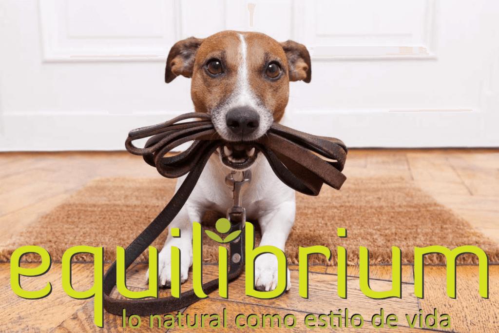 collares digitales para perros