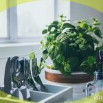 sembrar hierbas en la cocina