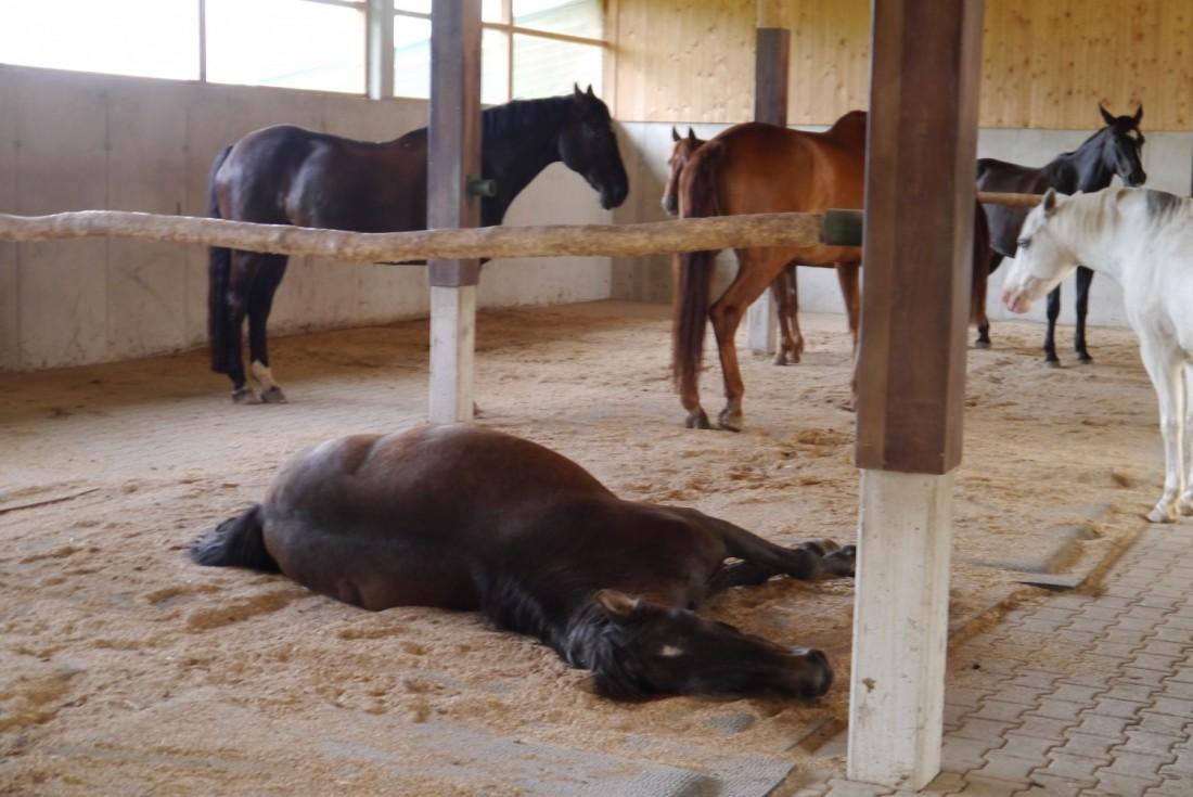 Une aire de repos aménagée par Equin Plus avec notamment des matelas et du bois à ronger.