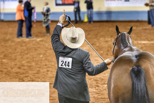 Afternoon AQHA World Halter Champions Include Frank Berris