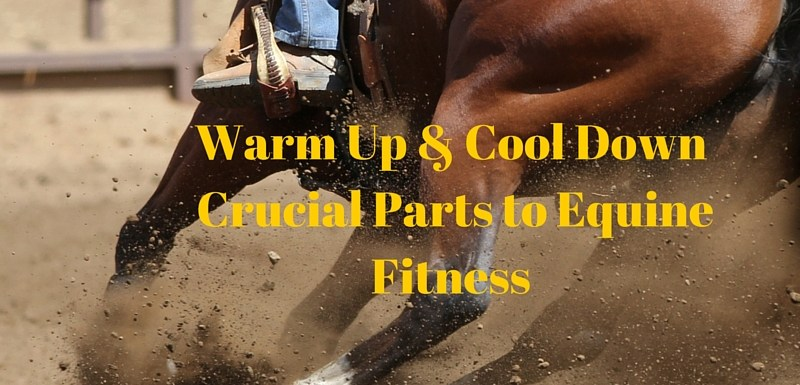 Warm Up and Cool Down Crucial Parts to Equine Fitness