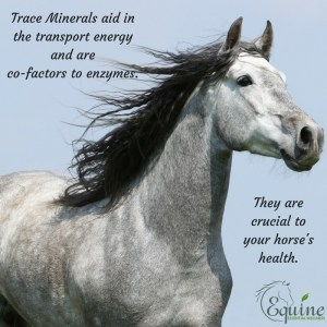 trace minerals for horses