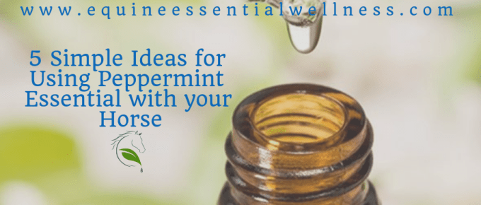 5 Simple Ideas for Using Peppermint Essential with your Horse