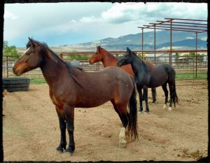 Horses used for Elsa Sinclair Clinic