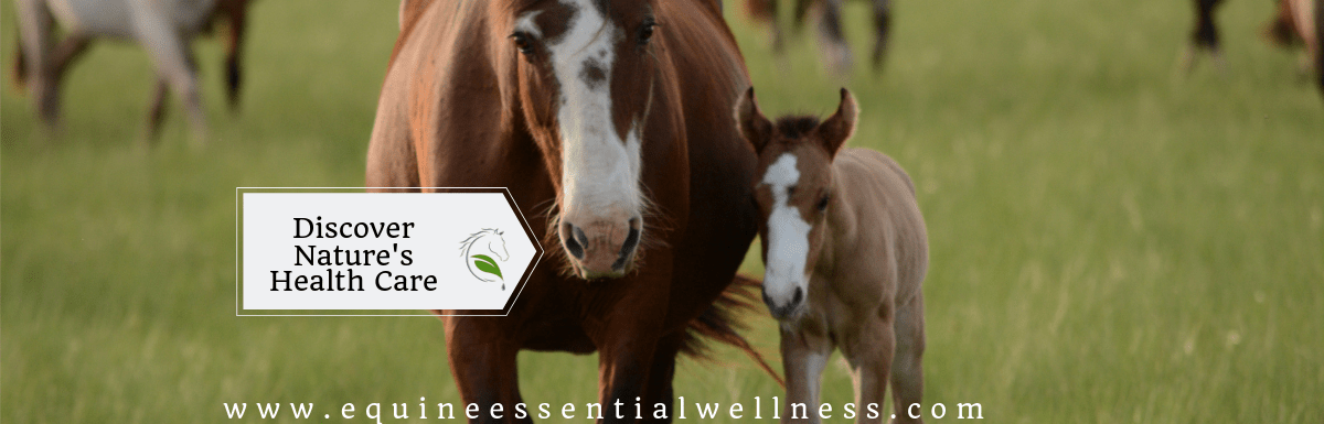 Equine Naturopathy – Discover Nature's Health Care