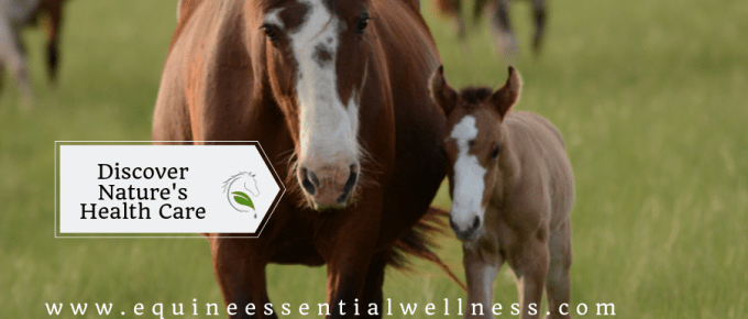 Equine Naturopathy- Discover Nature's Health Care