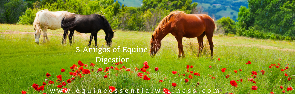 The Three Amigos of Equine Digestive Health
