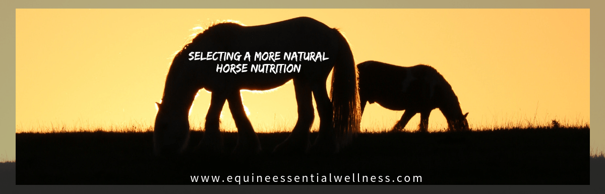 Equine Nutrition – What To Feed